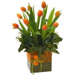Tulipanes Fiesta