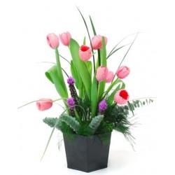 Tulipanes Primavera
